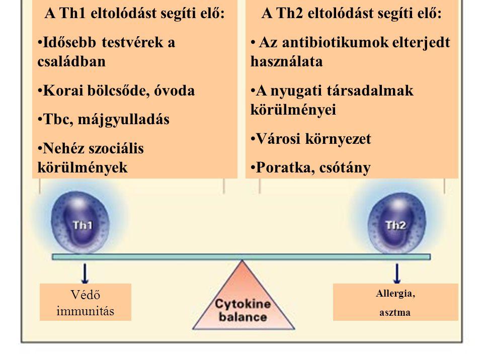 A Th1 eltolódást segíti elő: A Th2 eltolódást segíti elő: