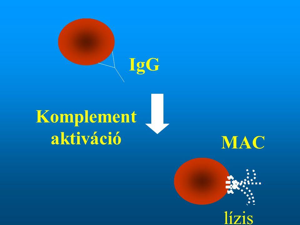 IgG Komplement aktiváció MAC lízis