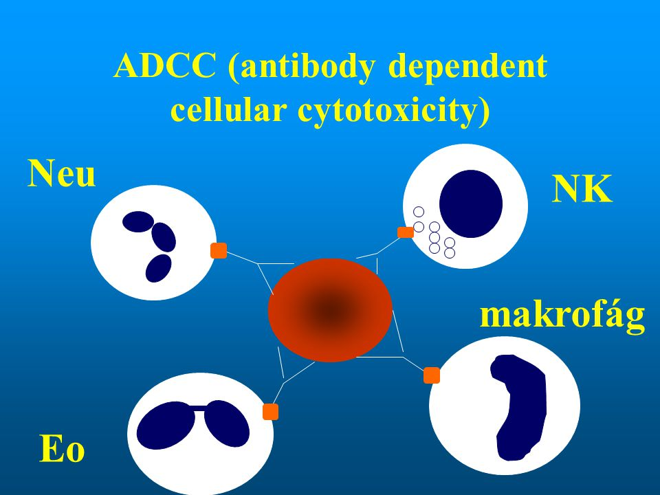 ADCC (antibody dependent cellular cytotoxicity)