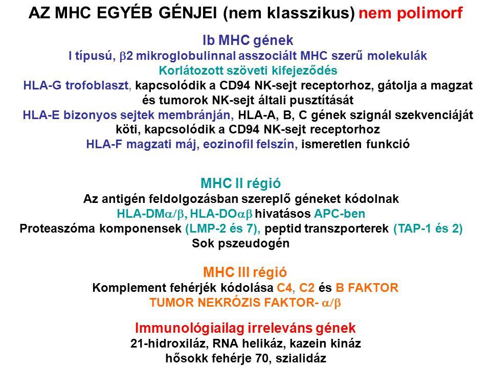 AZ MHC EGYÉB GÉNJEI (nem klasszikus) nem polimorf