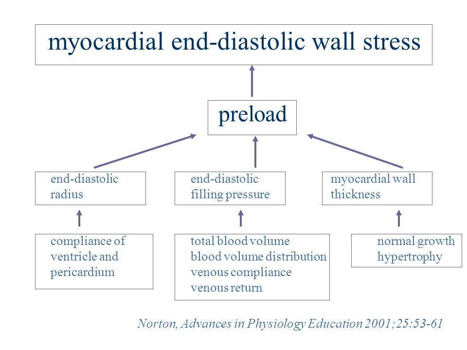 myocardial end-diastolic wall stress