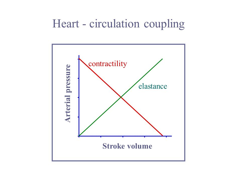 Heart - circulation coupling