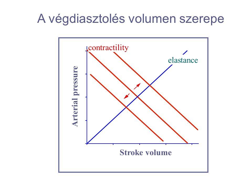 A végdiasztolés volumen szerepe