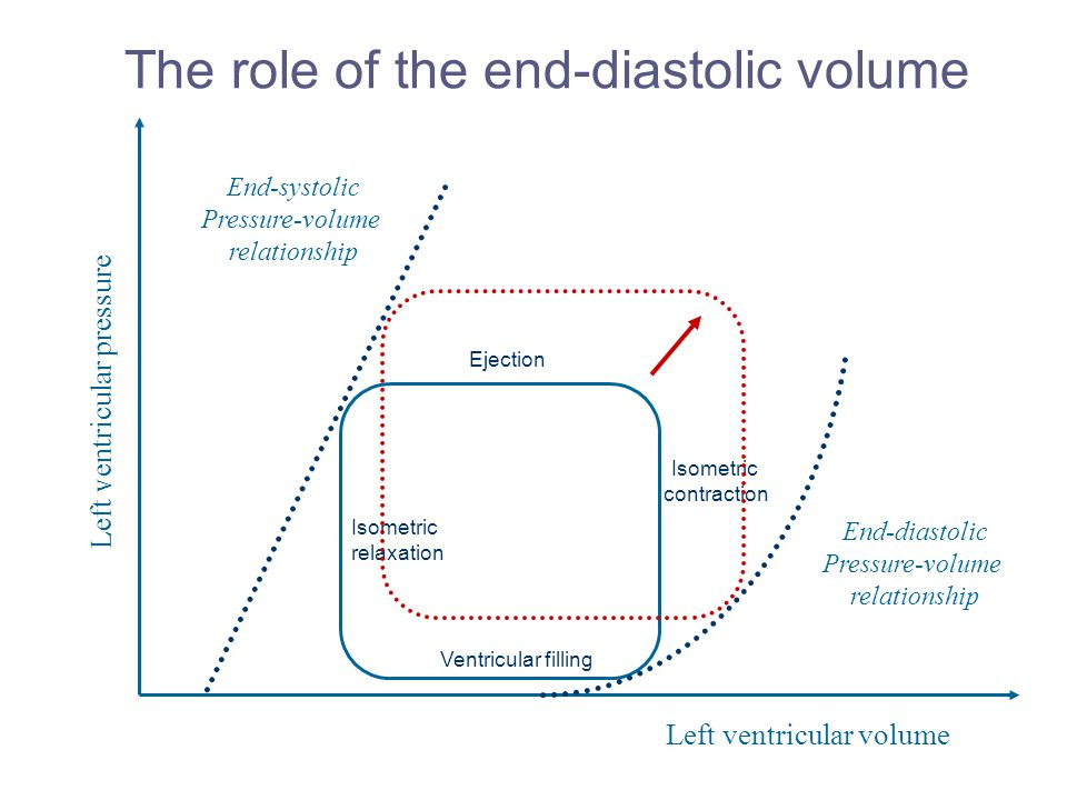 The role of the end-diastolic volume