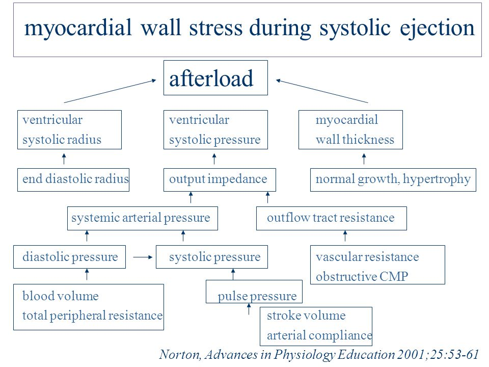 myocardial wall stress during systolic ejection