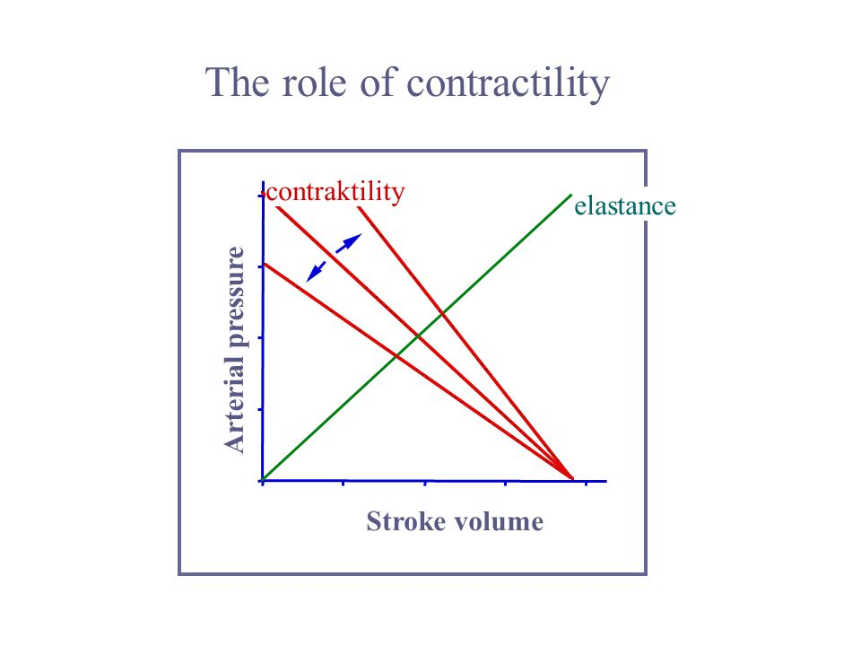 The role of contractility