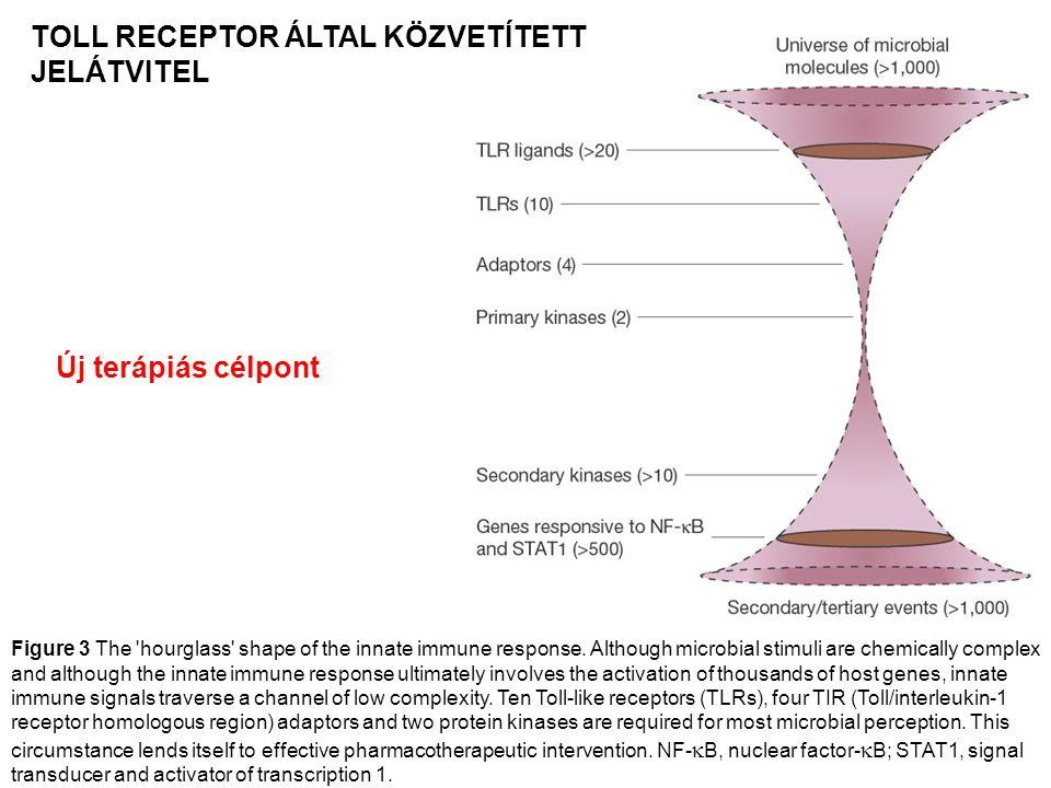 TOLL RECEPTOR ÁLTAL KÖZVETÍTETT JELÁTVITEL
