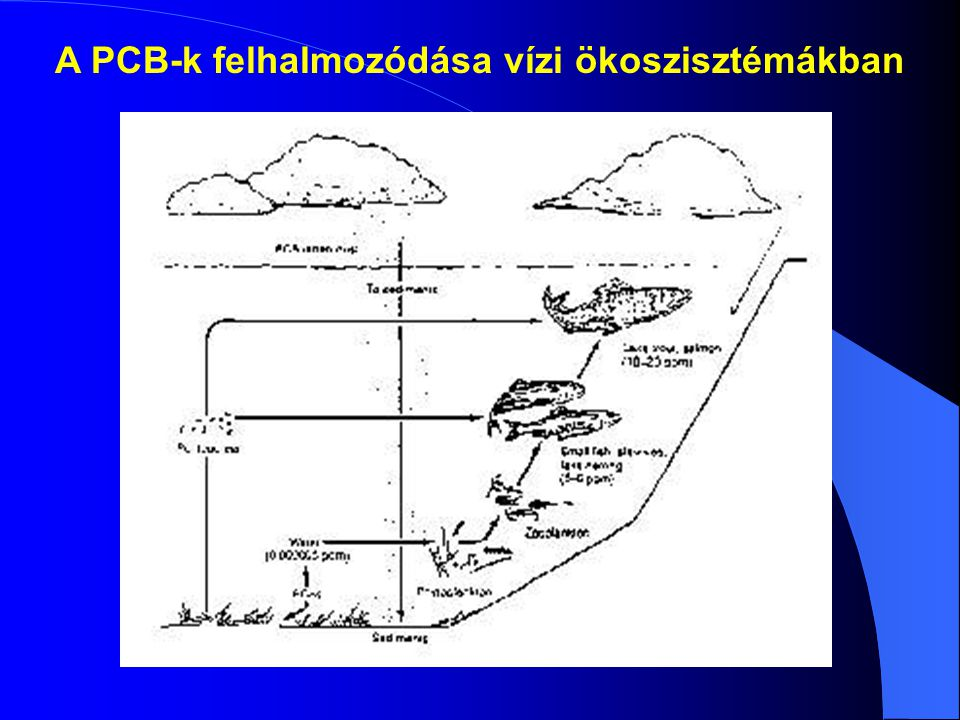 A PCB-k felhalmozódása vízi ökoszisztémákban