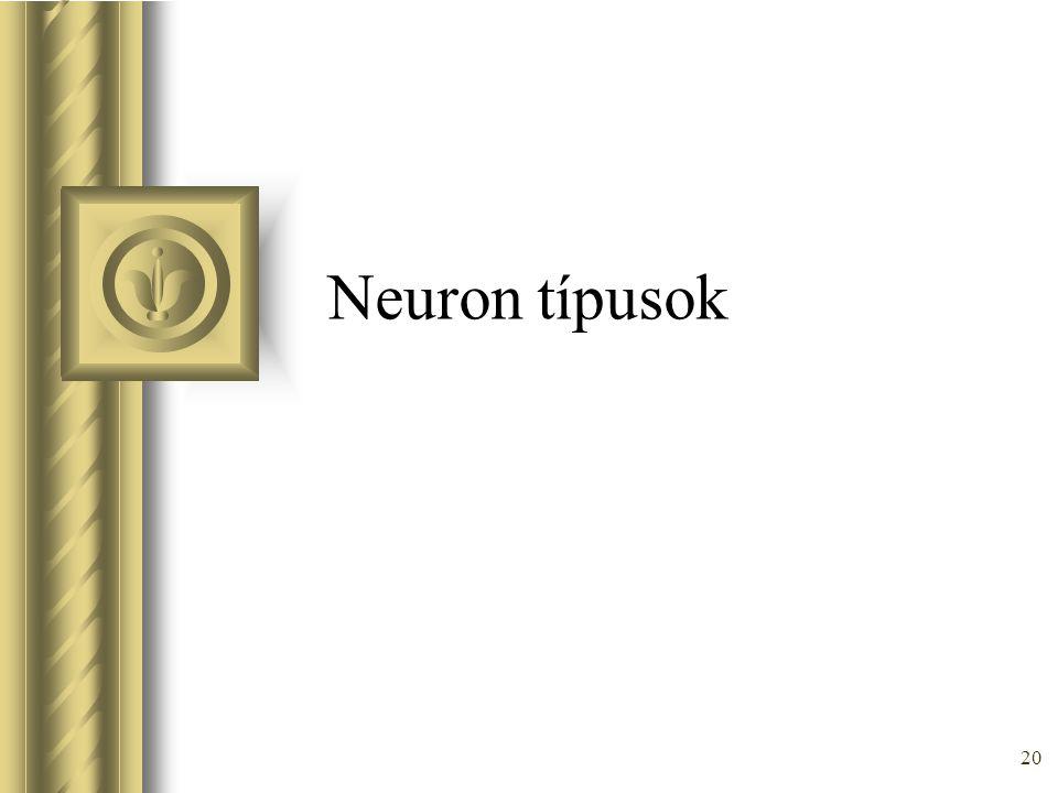 Neuron típusok