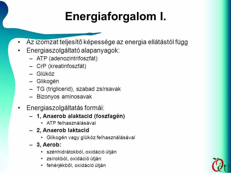 Energiaforgalom I. Az izomzat teljesítő képessége az energia ellátástól függ. Energiaszolgáltató alapanyagok: