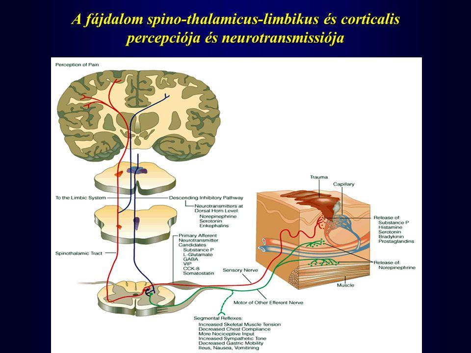 A fájdalom spino-thalamicus-limbikus és corticalis percepciója és neurotransmissiója