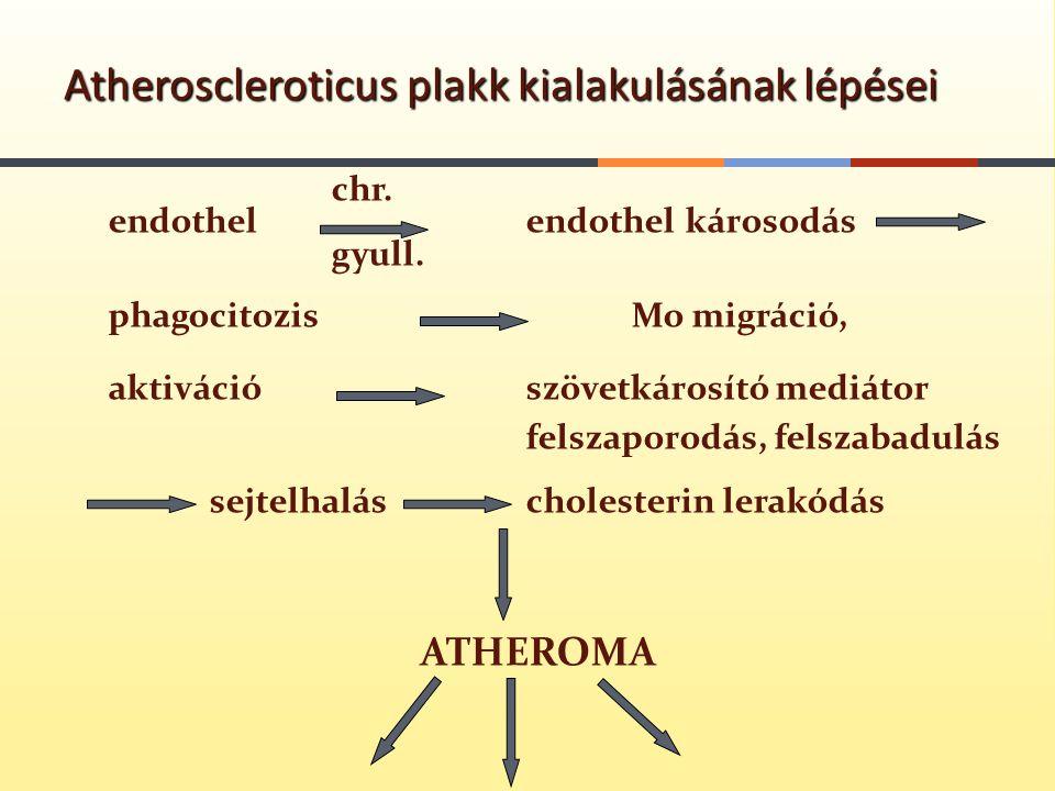 Atheroscleroticus plakk kialakulásának lépései