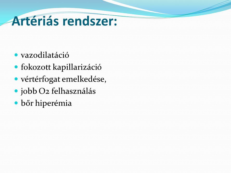 Artériás rendszer: vazodilatáció fokozott kapillarizáció