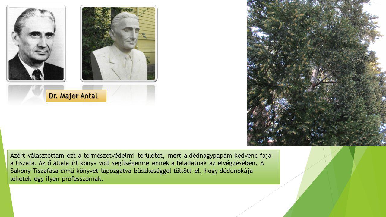 Dr. Majer Antal