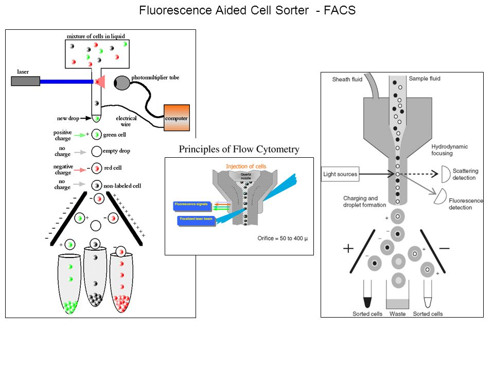 Fluorescence Aided Cell Sorter - FACS