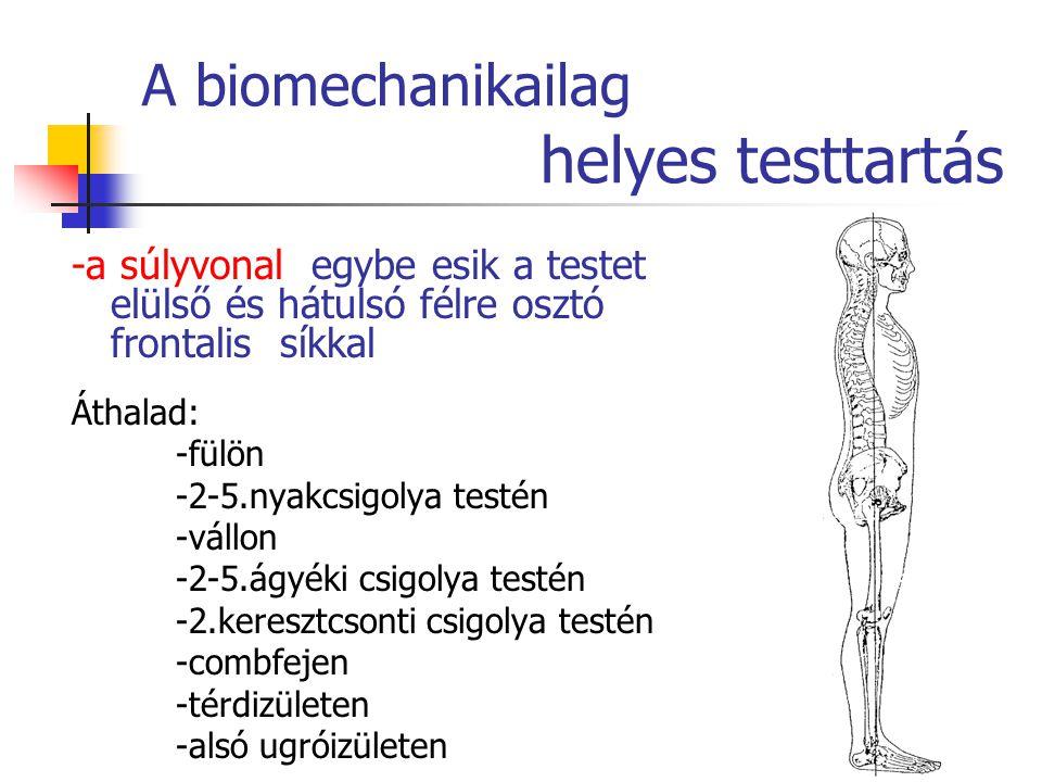 A biomechanikailag helyes testtartás