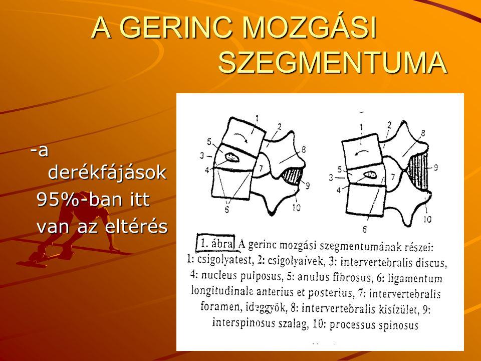 A GERINC MOZGÁSI SZEGMENTUMA