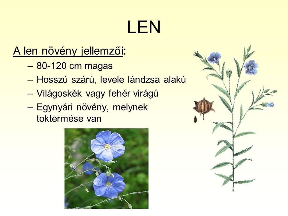 LEN A len növény jellemzői: 80-120 cm magas