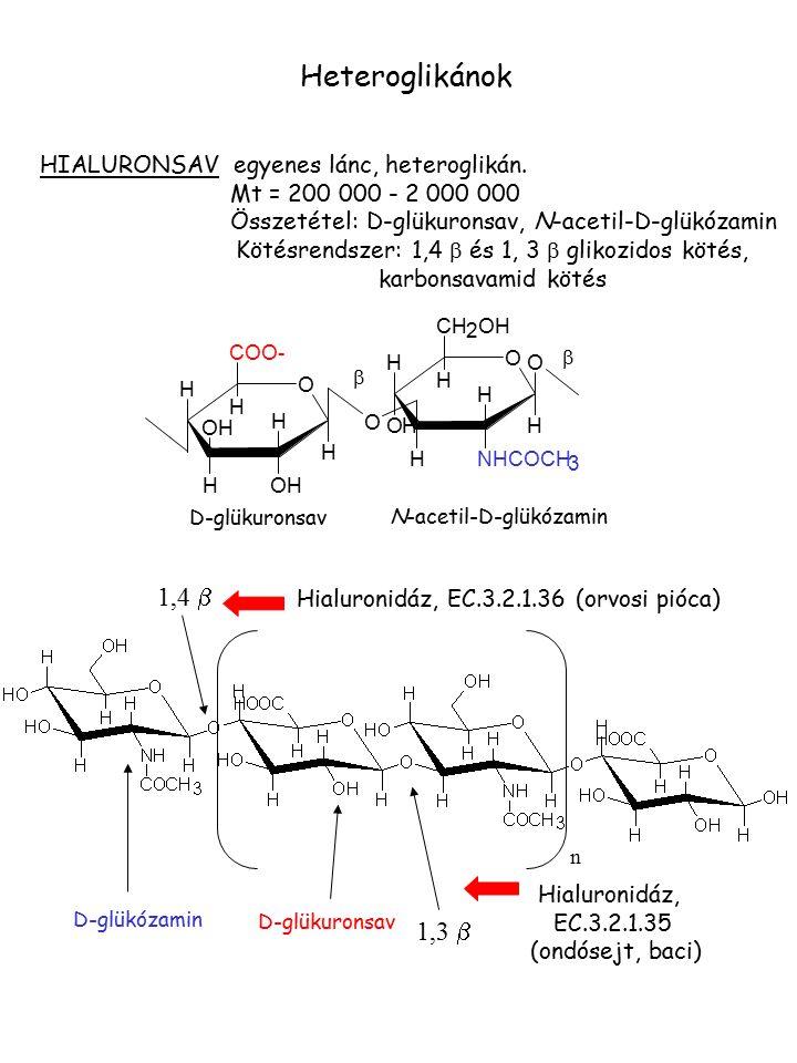 Heteroglikánok 1,4 b 1,3 b HIALURONSAV egyenes lánc, heteroglikán.