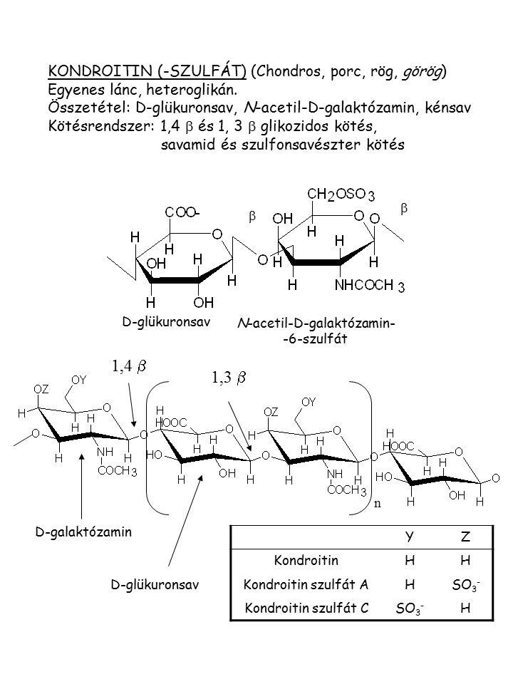 N-acetil-D-galaktózamin- -6-szulfát