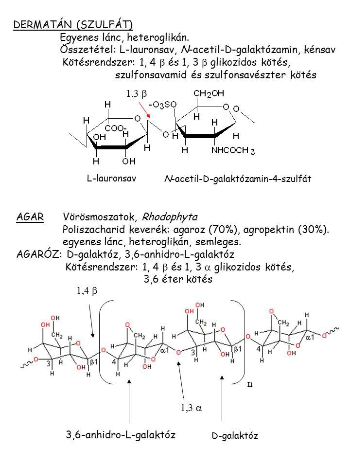 N-acetil-D-galaktózamin-4-szulfát