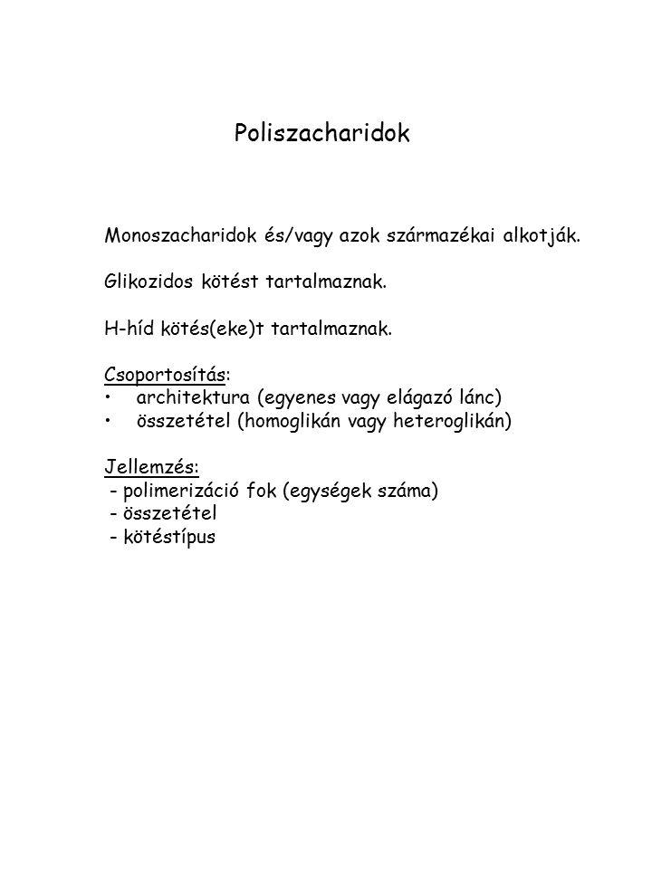 Poliszacharidok Monoszacharidok és/vagy azok származékai alkotják.