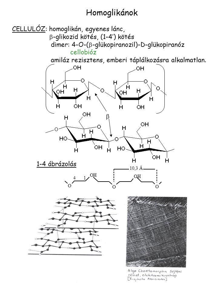Homoglikánok CELLULÓZ: homoglikán, egyenes lánc,