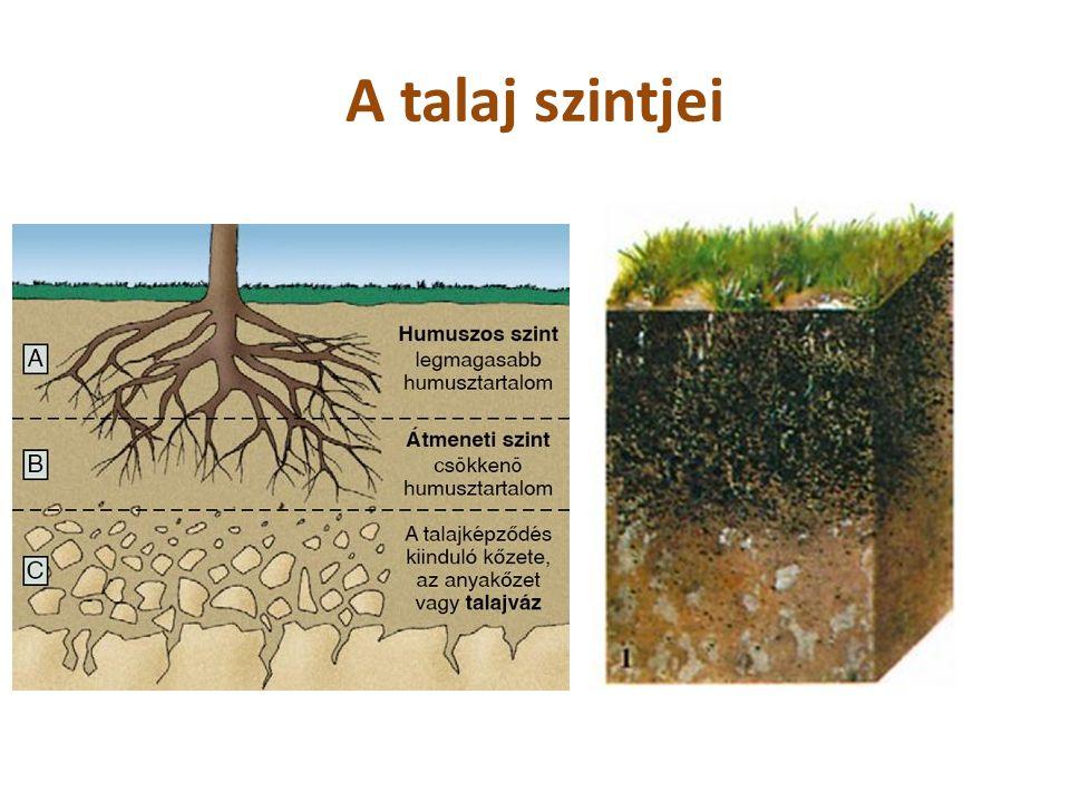 A talaj szintjei