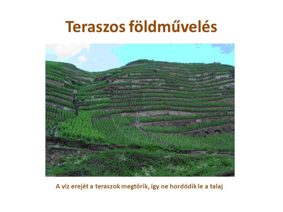 Teraszos földművelés A víz erejét a teraszok megtörik, így ne hordódik le a talaj