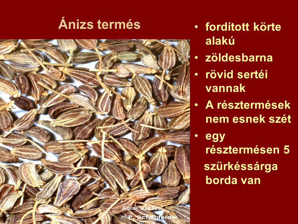 Ánizs termés fordított körte alakú zöldesbarna rövid sertéi vannak