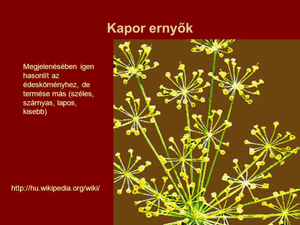 Kapor ernyők Megjelenésében igen hasonlít az édesköményhez, de termése más (széles, szárnyas, lapos, kisebb)