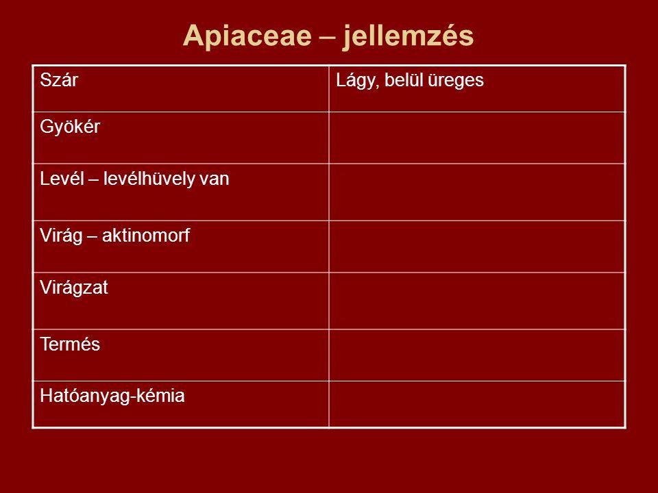 Apiaceae – jellemzés Szár Lágy, belül üreges Gyökér