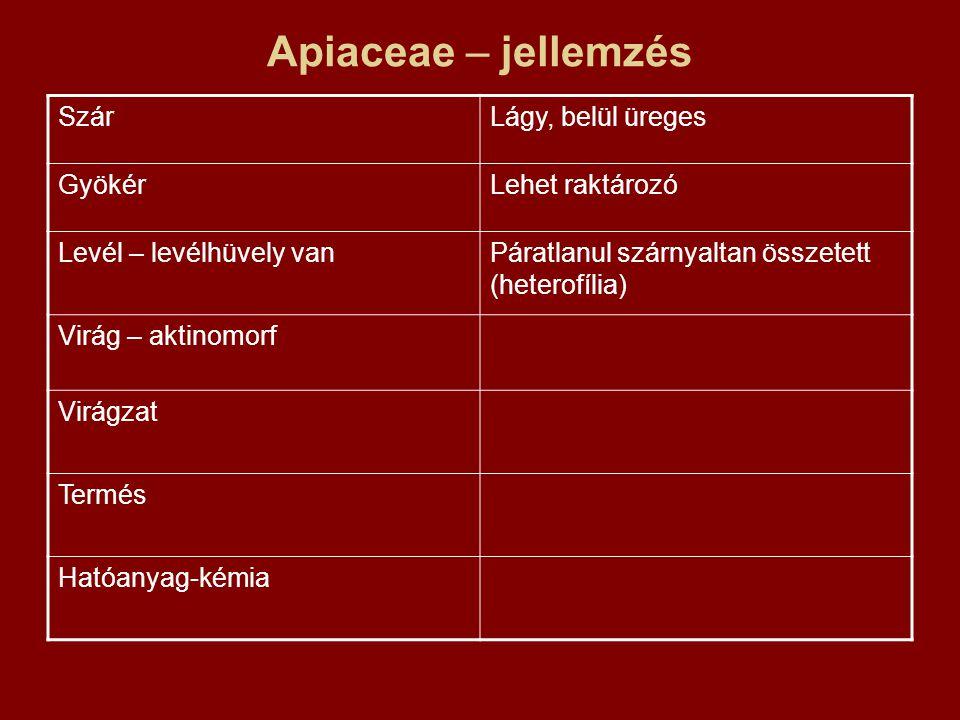 Apiaceae – jellemzés Szár Lágy, belül üreges Gyökér Lehet raktározó