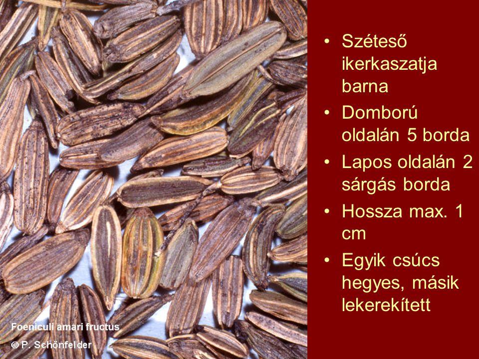Széteső ikerkaszatja barna