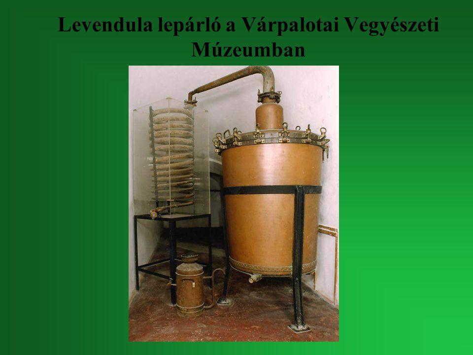Levendula lepárló a Várpalotai Vegyészeti Múzeumban