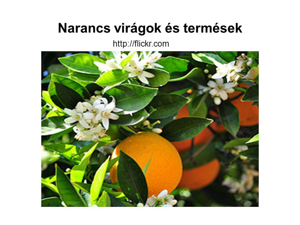 Narancs virágok és termések