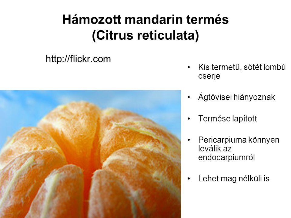Hámozott mandarin termés (Citrus reticulata)