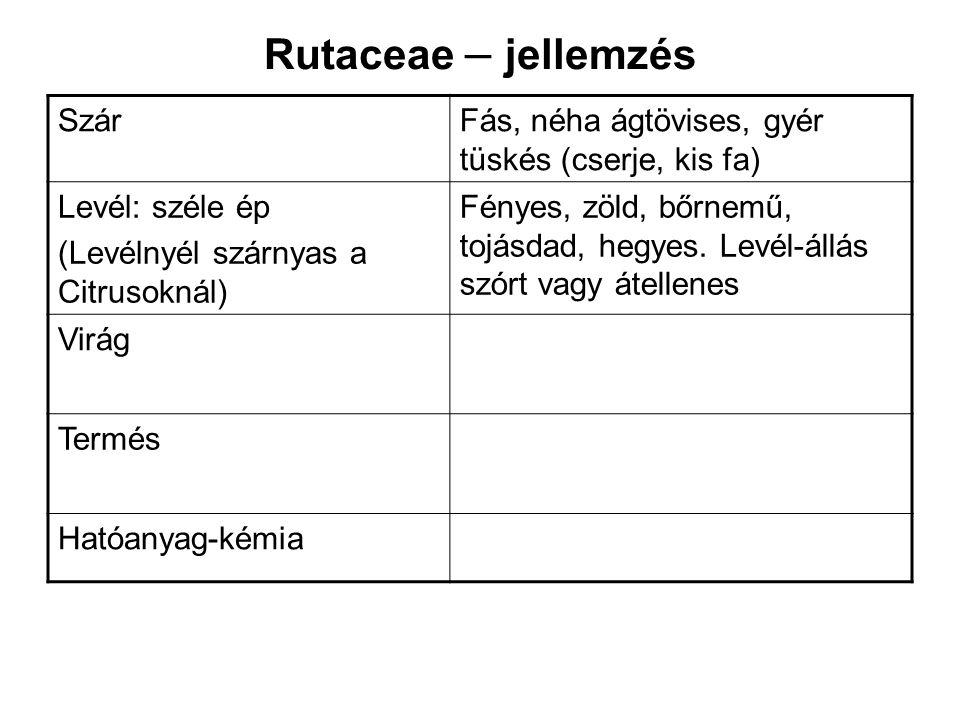 Rutaceae – jellemzés Szár