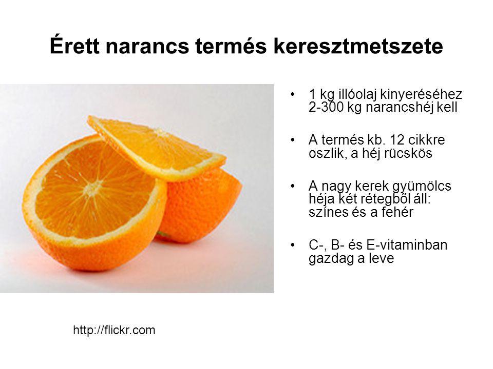 Érett narancs termés keresztmetszete