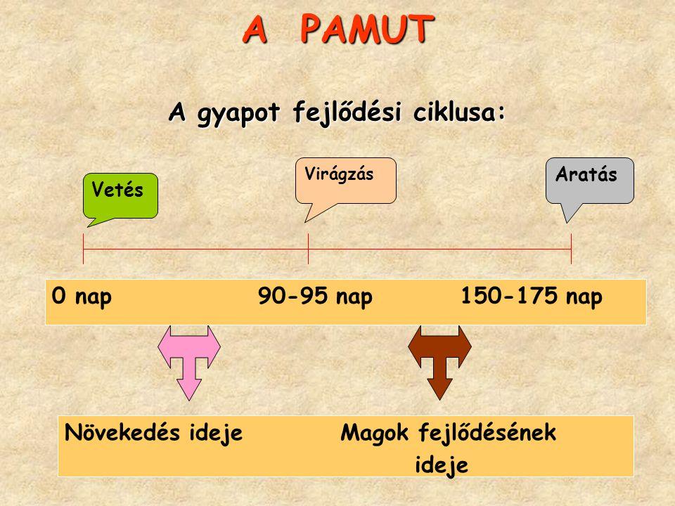 A PAMUT A gyapot fejlődési ciklusa: