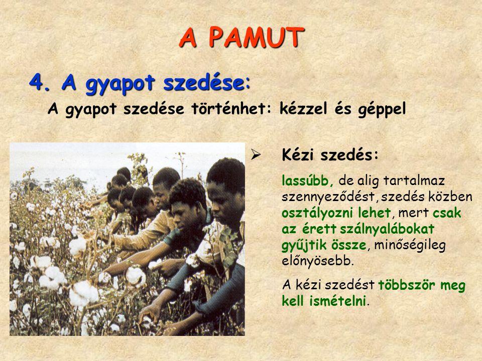 A PAMUT 4. A gyapot szedése: Kézi szedés: