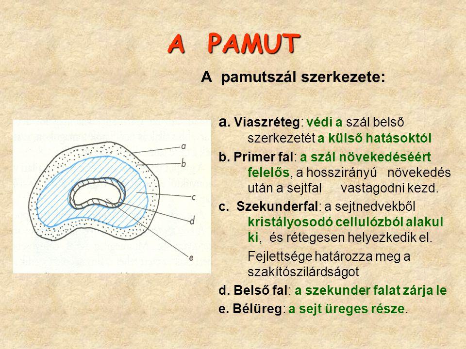 A PAMUT A pamutszál szerkezete: