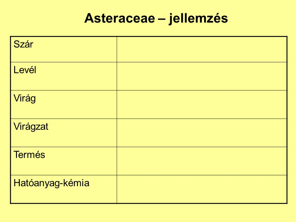 Asteraceae – jellemzés