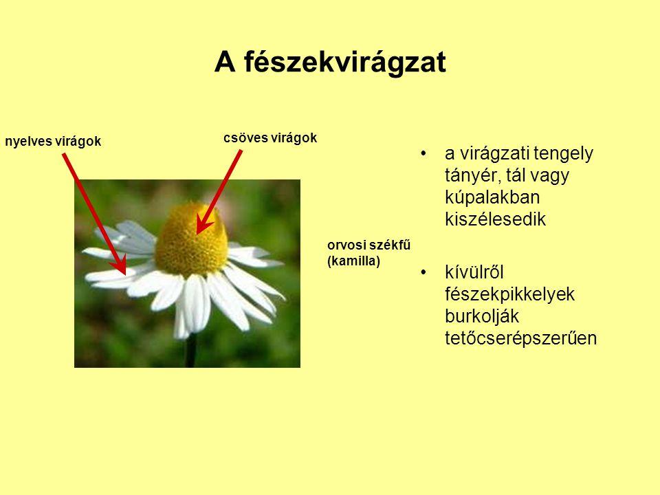 A fészekvirágzat a virágzati tengely tányér, tál vagy kúpalakban kiszélesedik. kívülről fészekpikkelyek burkolják tetőcserépszerűen.
