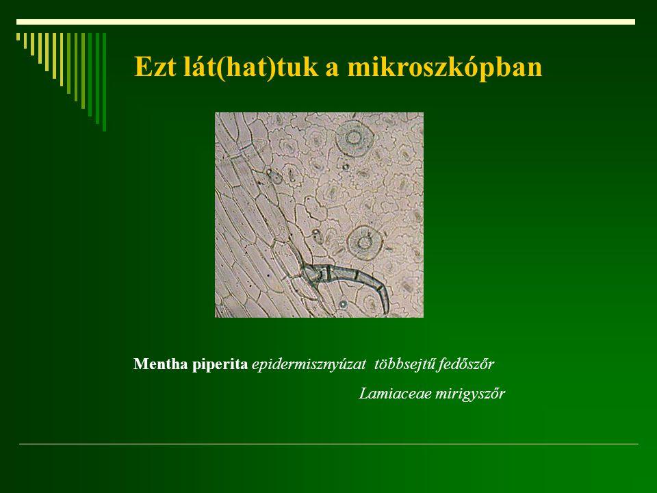 Ezt lát(hat)tuk a mikroszkópban