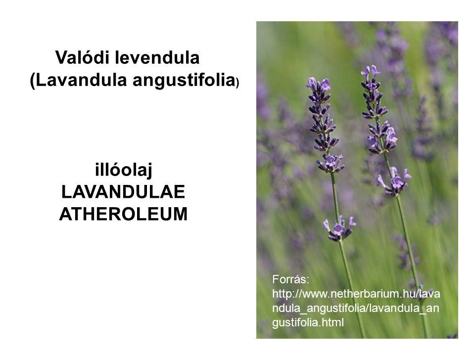 LAVANDULAE ATHEROLEUM