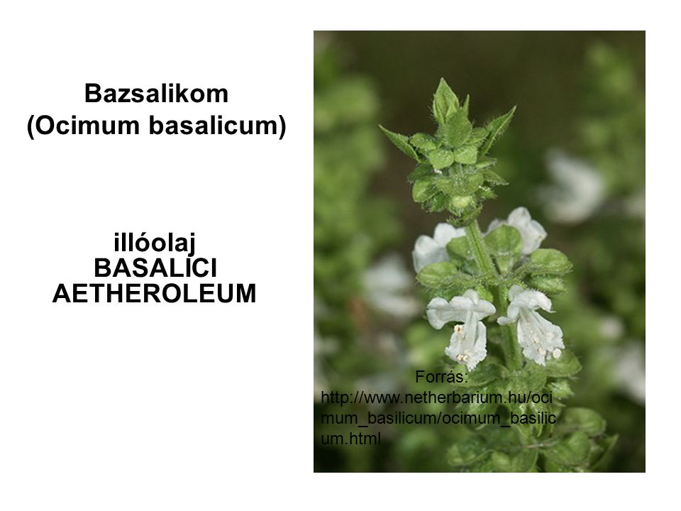 Bazsalikom (Ocimum basalicum) illóolaj BASALICI AETHEROLEUM