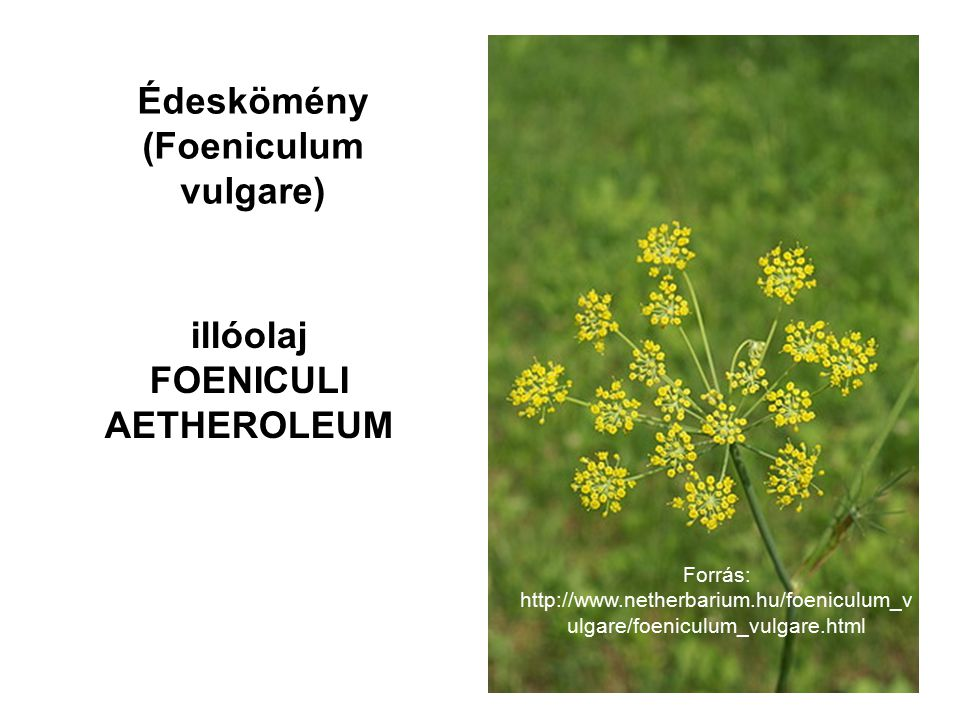 FOENICULI AETHEROLEUM