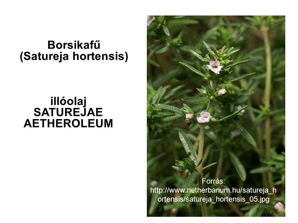 Borsikafű (Satureja hortensis) illóolaj SATUREJAE AETHEROLEUM