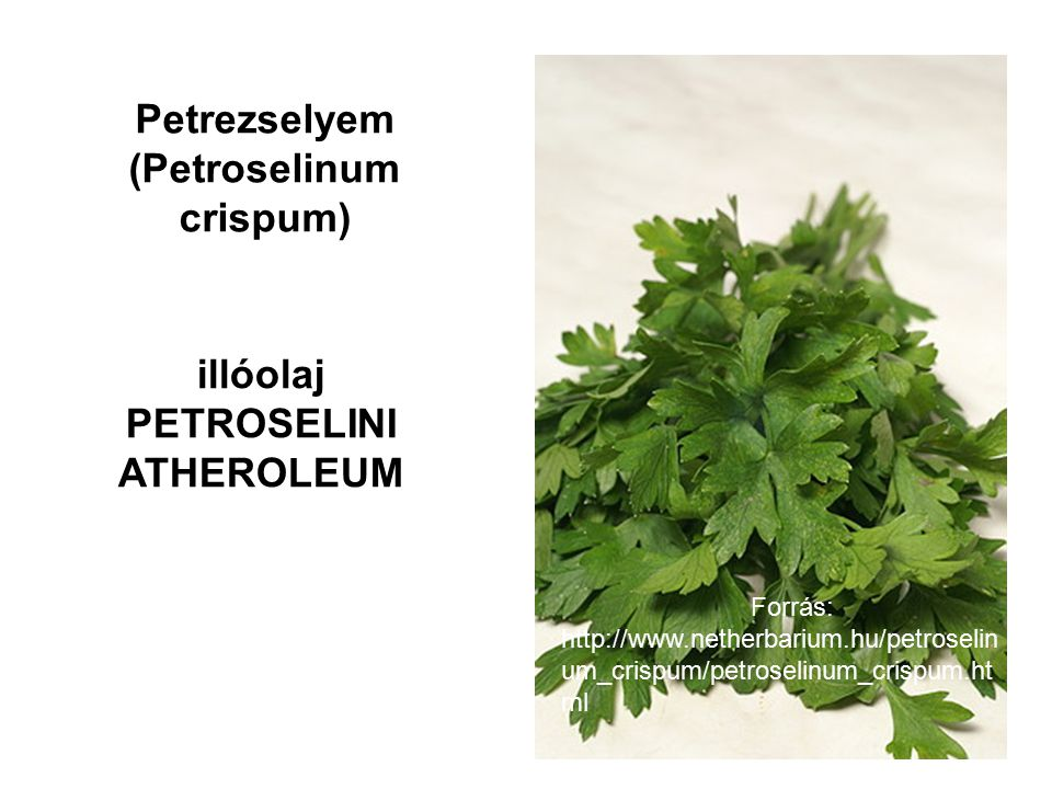 Petrezselyem (Petroselinum crispum)